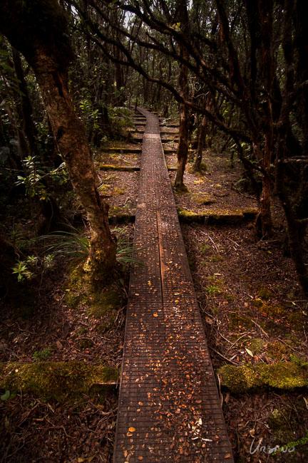 alakai-swamp-trail