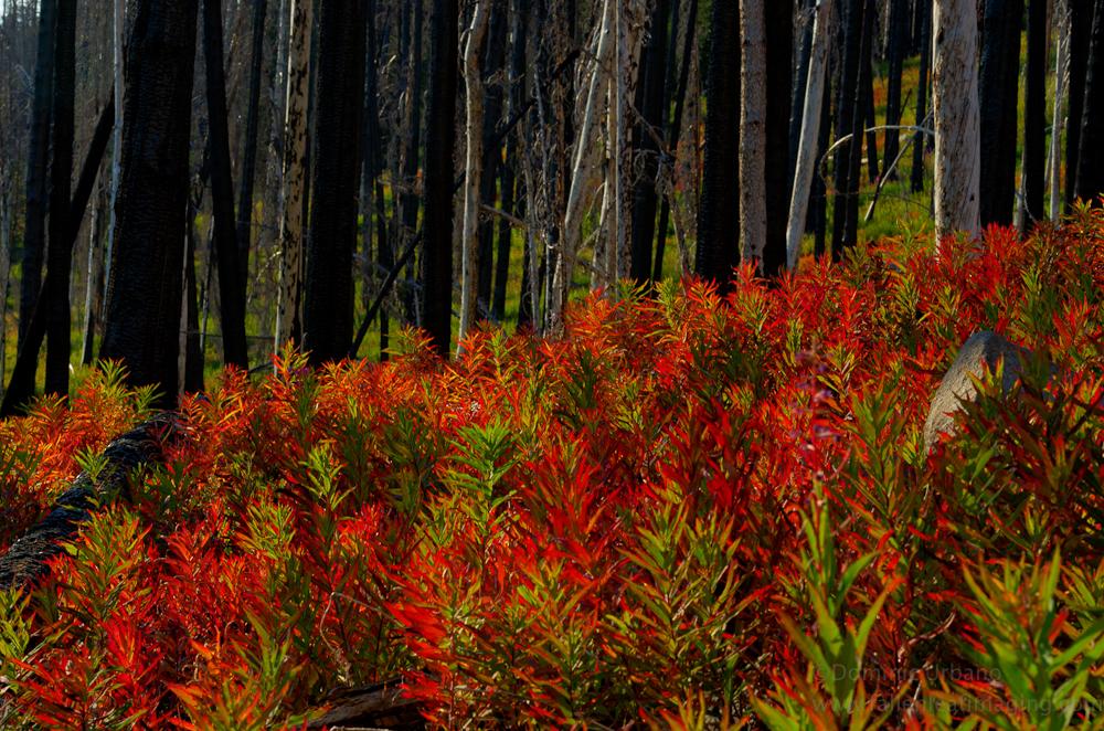Cascade mountain fall colors.